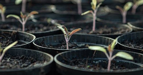 Moving your garden advice - grow seedlings