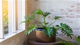 Houseplant Buying Guide