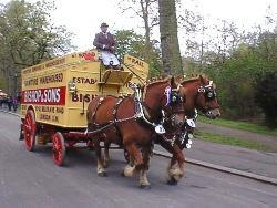 Suffolk Punch horses pulling our horse drawn pantechnicon wagon